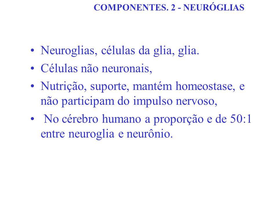 COMPONENTES. 2 - NEURÓGLIAS Neuroglias, células da glia, glia. Células não neuronais, Nutrição, suporte, mantém homeostase, e não participam do impuls
