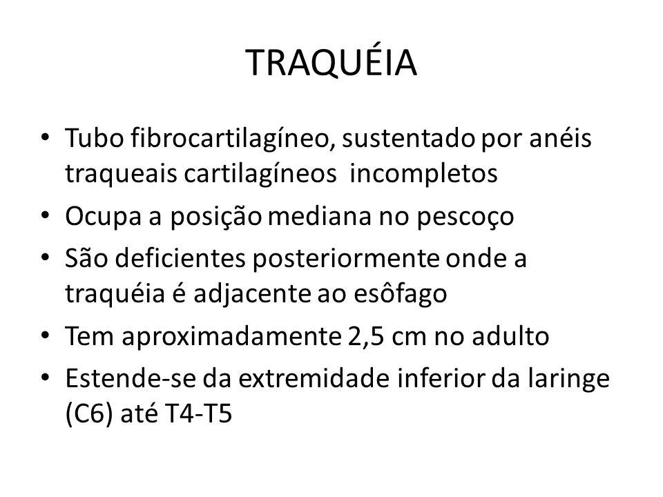 TRAQUÉIA Tubo fibrocartilagíneo, sustentado por anéis traqueais cartilagíneos incompletos Ocupa a posição mediana no pescoço São deficientes posterior