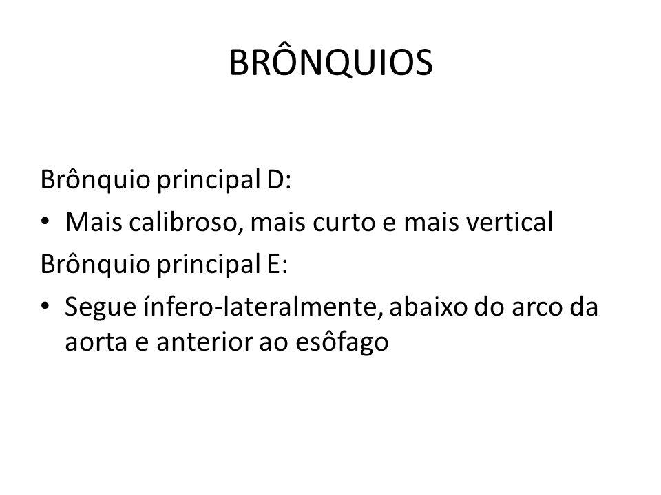 BRÔNQUIOS Brônquio principal D: Mais calibroso, mais curto e mais vertical Brônquio principal E: Segue ínfero-lateralmente, abaixo do arco da aorta e