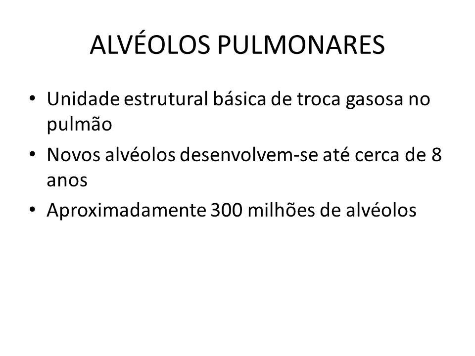 ALVÉOLOS PULMONARES Unidade estrutural básica de troca gasosa no pulmão Novos alvéolos desenvolvem-se até cerca de 8 anos Aproximadamente 300 milhões
