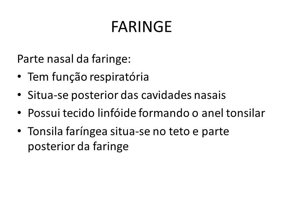 FARINGE Parte nasal da faringe: Tem função respiratória Situa-se posterior das cavidades nasais Possui tecido linfóide formando o anel tonsilar Tonsil