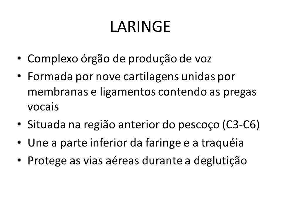 LARINGE Complexo órgão de produção de voz Formada por nove cartilagens unidas por membranas e ligamentos contendo as pregas vocais Situada na região a