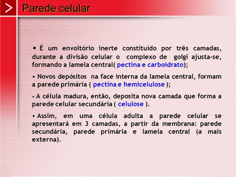 Parede celular É um envoltório inerte constituído por três camadas, durante a divisão celular o complexo de golgi ajusta-se, formando a lamela central