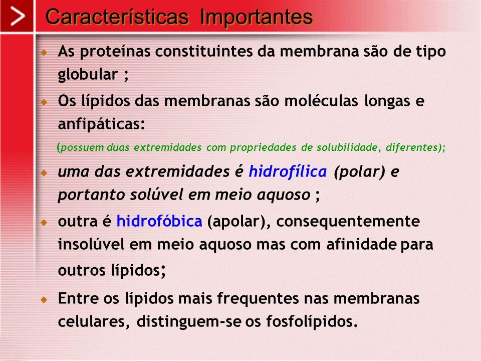  As proteínas constituintes da membrana são de tipo globular ;  Os lípidos das membranas são moléculas longas e anfipáticas: ( possuem duas extremid