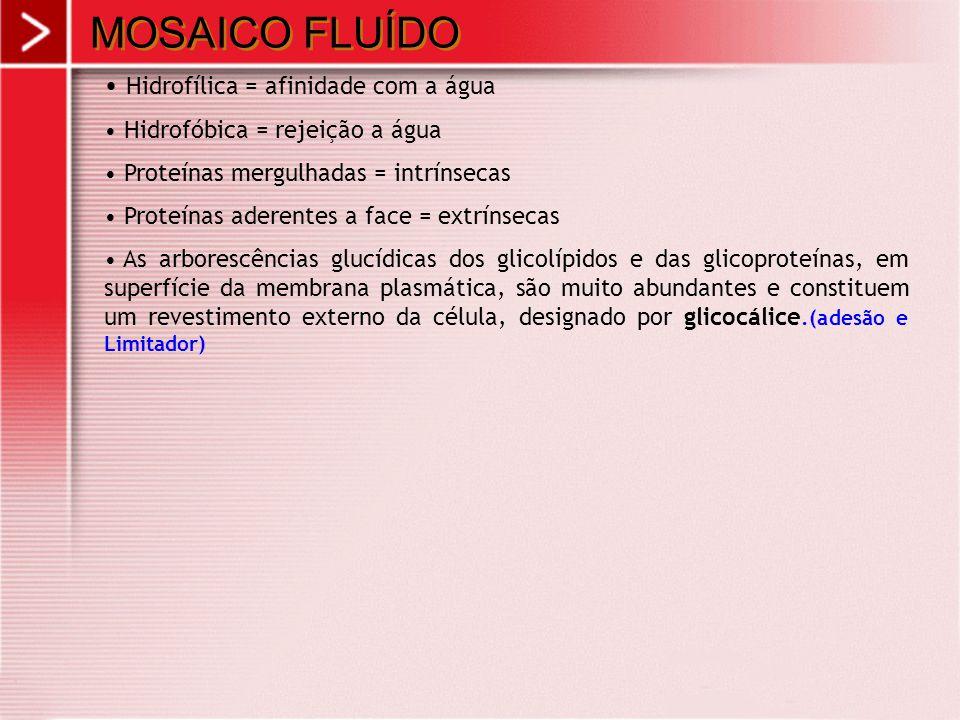 MOSAICO FLUÍDO Hidrofílica = afinidade com a água Hidrofóbica = rejeição a água Proteínas mergulhadas = intrínsecas Proteínas aderentes a face = extrí