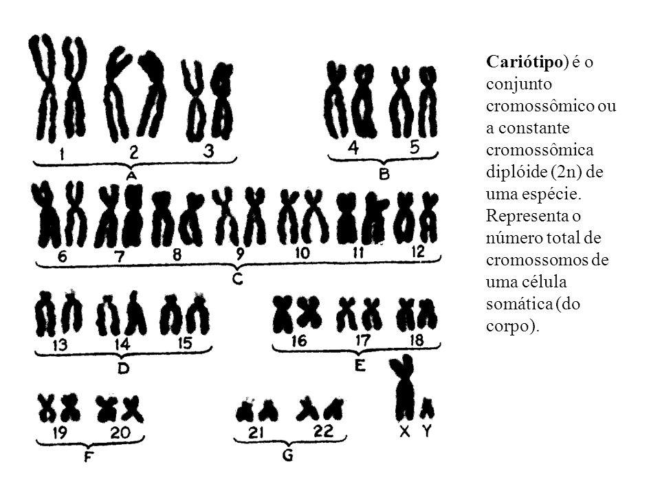 Cariótipo) é o conjunto cromossômico ou a constante cromossômica diplóide (2n) de uma espécie.
