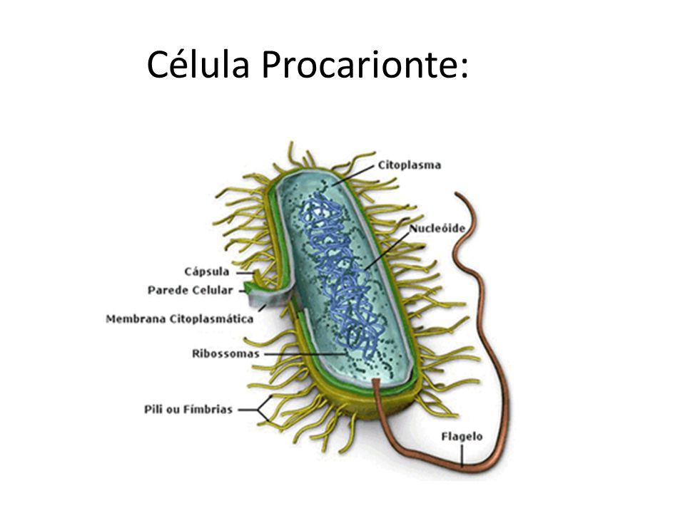 Célula Procarionte: