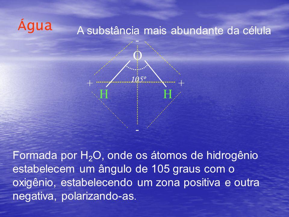 Água O H - ++ - Formada por H 2 O, onde os átomos de hidrogênio estabelecem um ângulo de 105 graus com o oxigênio, estabelecendo um zona positiva e outra negativa, polarizando-as.
