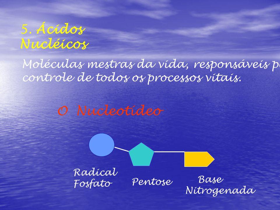 5. Ácidos Nucléicos O Nucleotídeo Moléculas mestras da vida, responsáveis pelo controle de todos os processos vitais. Radical Fosfato Pentose Base Nit