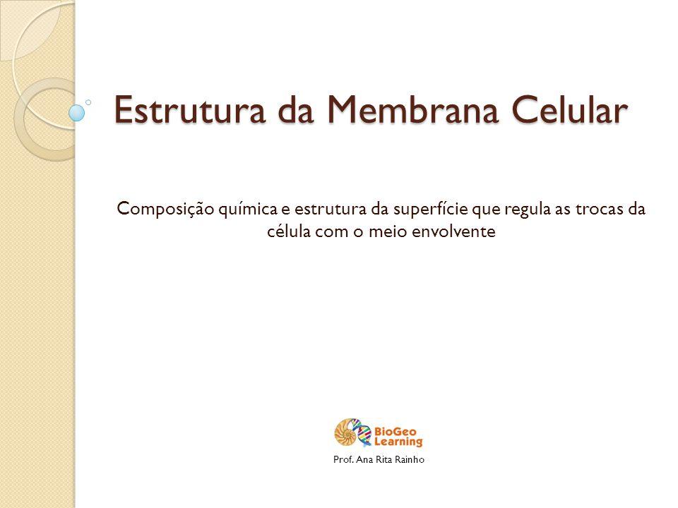 Estrutura da Membrana Celular Composição química e estrutura da superfície que regula as trocas da célula com o meio envolvente Prof. Ana Rita Rainho