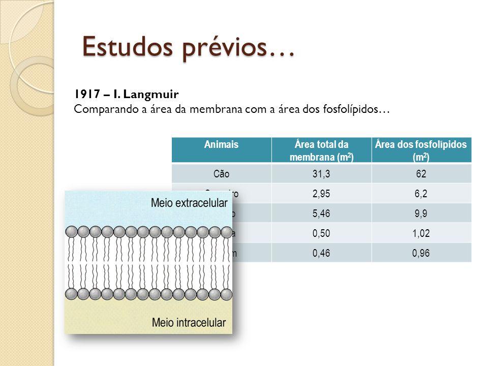 Estudos prévios… AnimaisÁrea total da membrana (m 2 ) Área dos fosfolípidos (m 2 ) Cão31,362 Carneiro2,956,2 Coelho5,469,9 Cobaia0,501,02 Homem0,460,96 1917 – I.