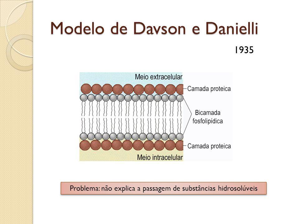 Modelo de Davson e Danielli 1935 Problema: não explica a passagem de substâncias hidrosolúveis