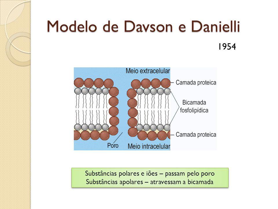 Modelo de Davson e Danielli 1954 Substâncias polares e iões – passam pelo poro Substâncias apolares – atravessam a bicamada Substâncias polares e iões – passam pelo poro Substâncias apolares – atravessam a bicamada