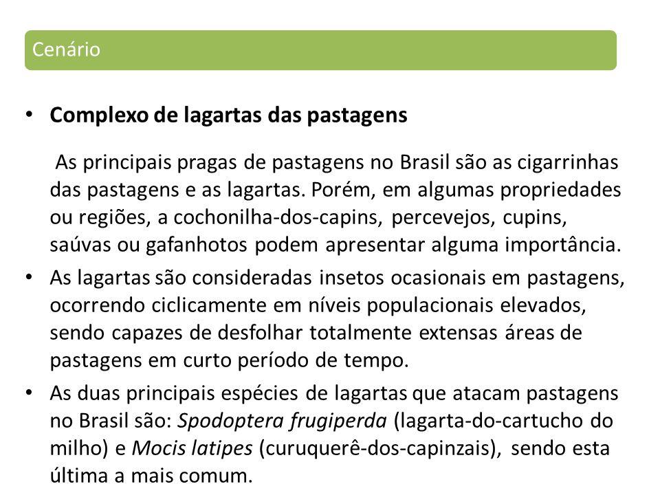 Complexo de lagartas das pastagens As principais pragas de pastagens no Brasil são as cigarrinhas das pastagens e as lagartas.