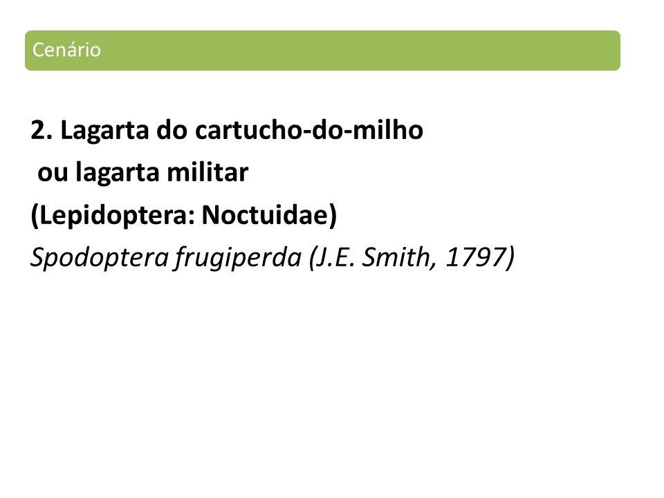 2. Lagarta do cartucho-do-milho ou lagarta militar (Lepidoptera: Noctuidae) Spodoptera frugiperda (J.E. Smith, 1797) Cenário