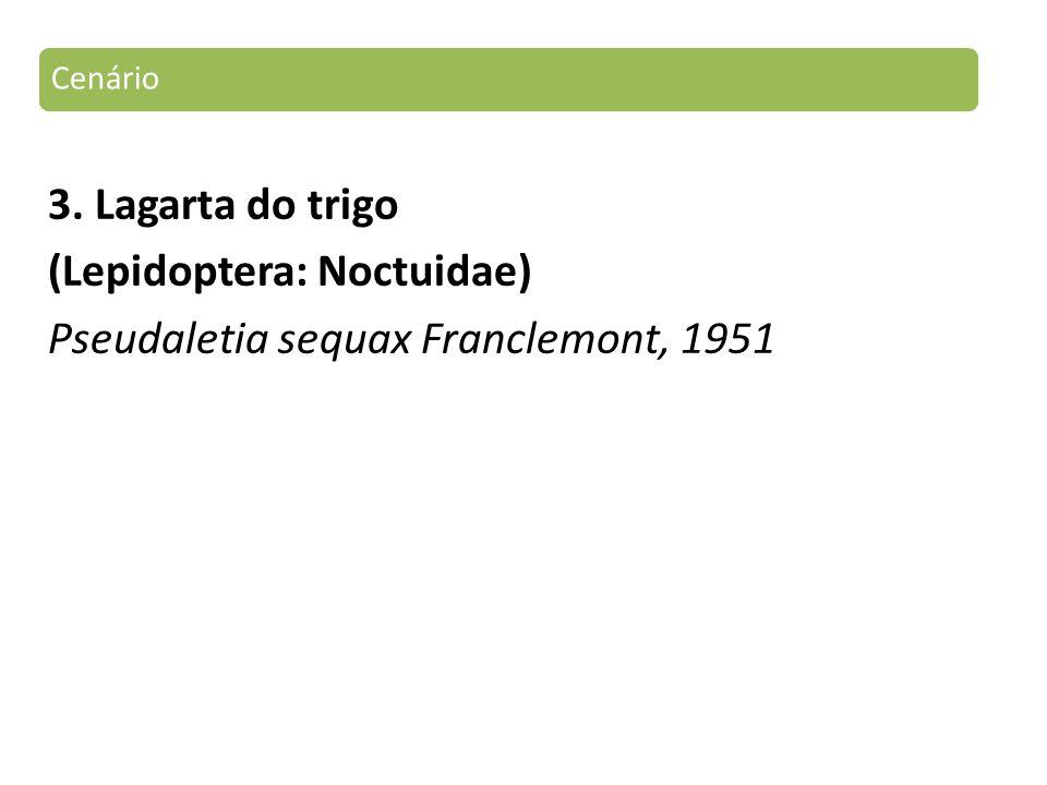3. Lagarta do trigo (Lepidoptera: Noctuidae) Pseudaletia sequax Franclemont, 1951 Cenário