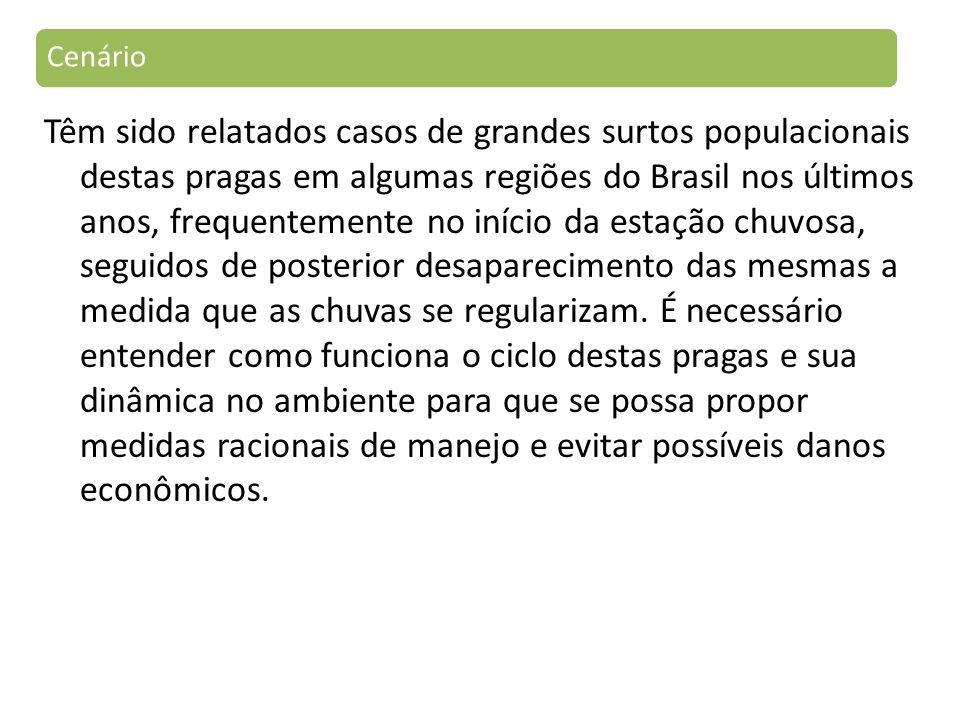 Têm sido relatados casos de grandes surtos populacionais destas pragas em algumas regiões do Brasil nos últimos anos, frequentemente no início da estação chuvosa, seguidos de posterior desaparecimento das mesmas a medida que as chuvas se regularizam.