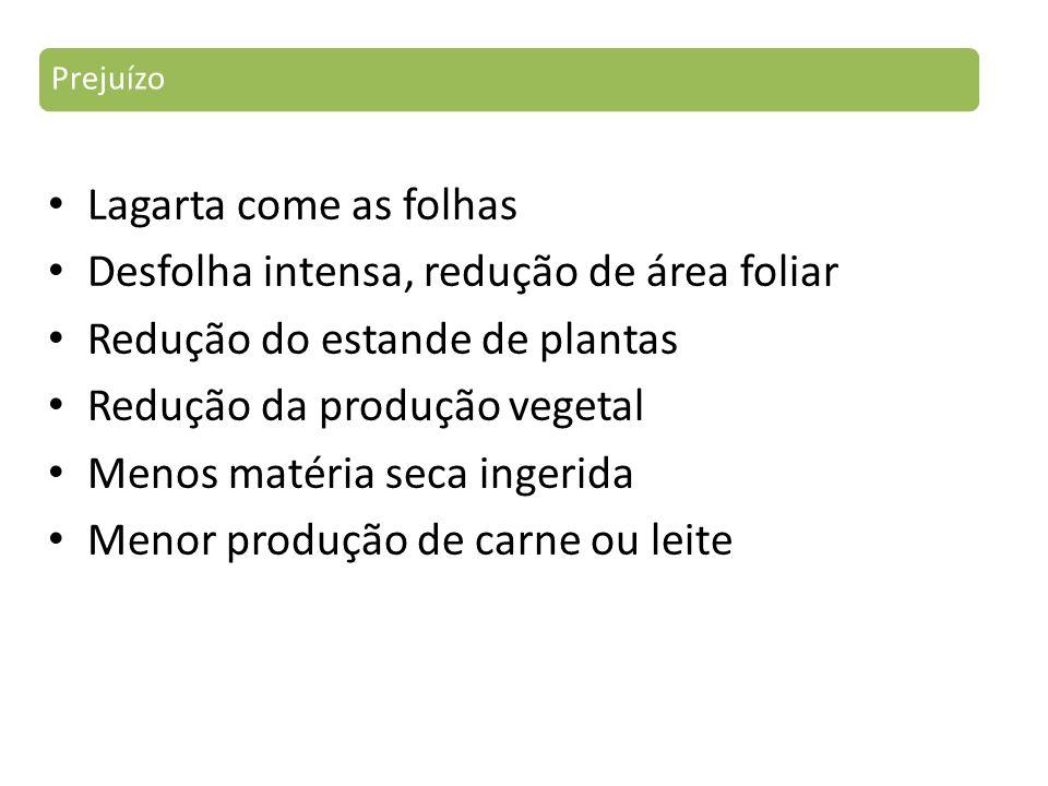 Lagarta come as folhas Desfolha intensa, redução de área foliar Redução do estande de plantas Redução da produção vegetal Menos matéria seca ingerida Menor produção de carne ou leite Prejuízo