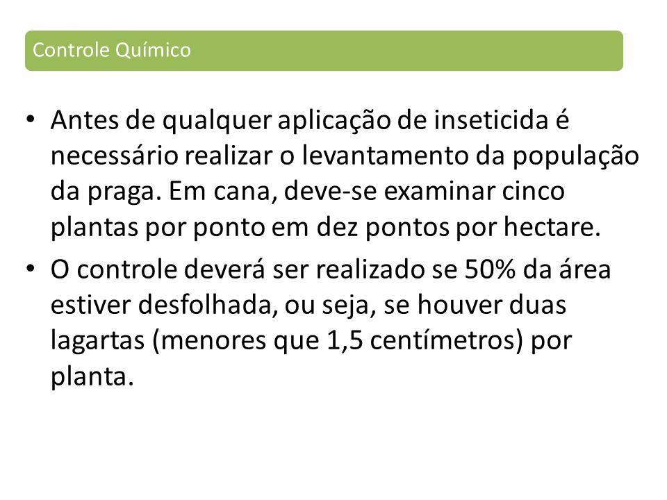 Antes de qualquer aplicação de inseticida é necessário realizar o levantamento da população da praga.