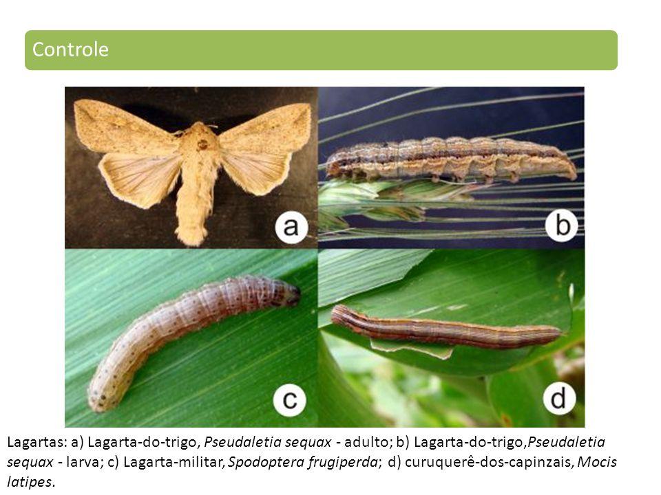 Lagartas: a) Lagarta-do-trigo, Pseudaletia sequax - adulto; b) Lagarta-do-trigo,Pseudaletia sequax - larva; c) Lagarta-militar, Spodoptera frugiperda; d) curuquerê-dos-capinzais, Mocis latipes.
