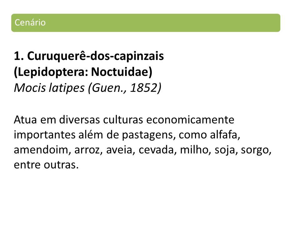 1. Curuquerê-dos-capinzais (Lepidoptera: Noctuidae) Mocis latipes (Guen., 1852) Cenário Atua em diversas culturas economicamente importantes além de p