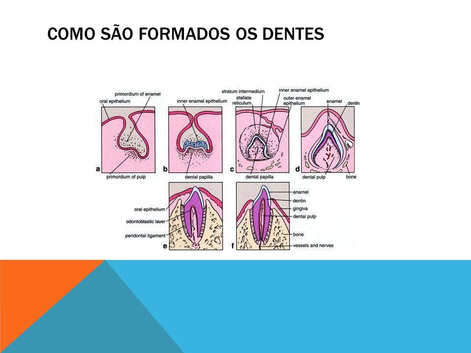 COMO SÃO FORMADOS OS DENTES