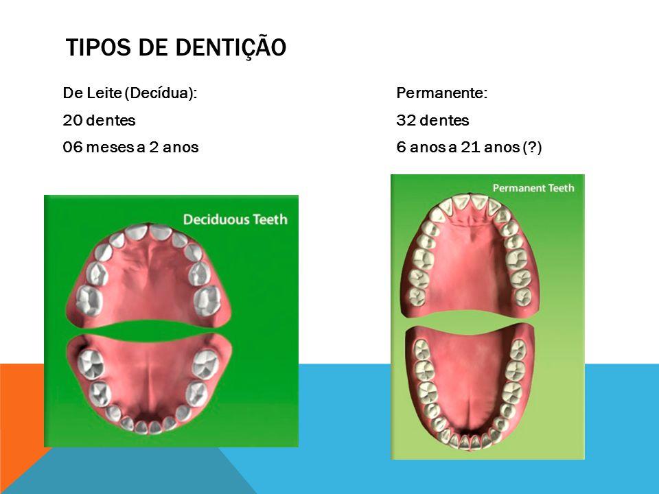 De Leite (Decídua): 20 dentes 06 meses a 2 anos Permanente: 32 dentes 6 anos a 21 anos (?) TIPOS DE DENTIÇÃO
