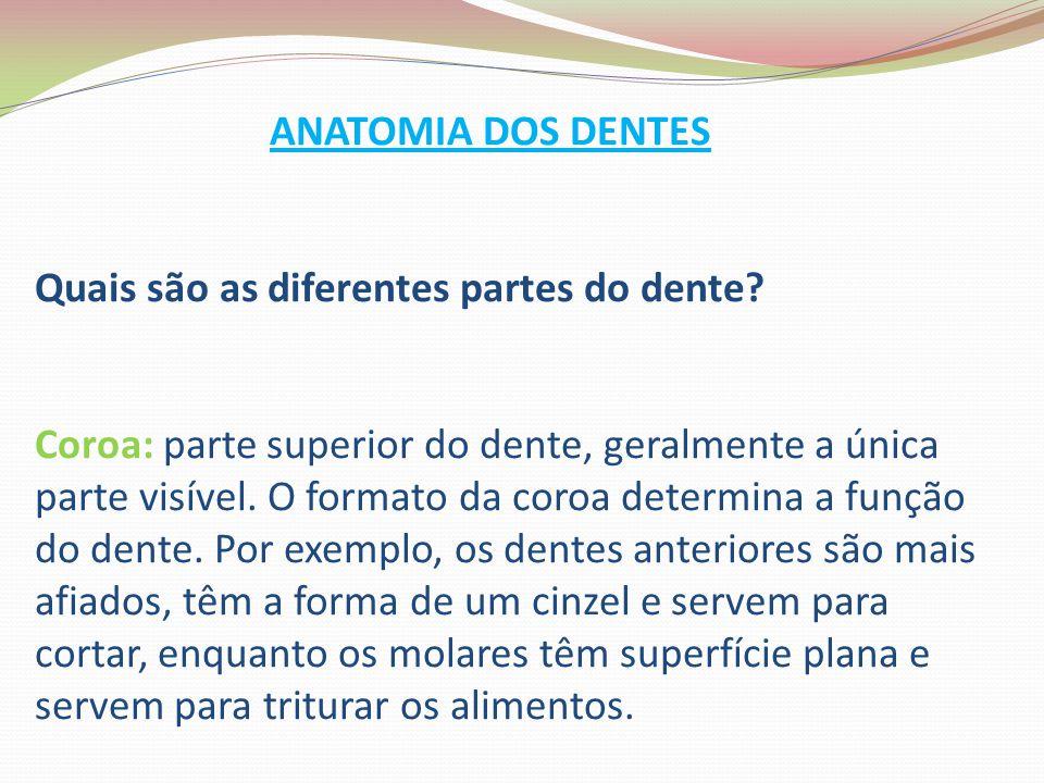 ANATOMIA DOS DENTES Quais são as diferentes partes do dente? Coroa: parte superior do dente, geralmente a única parte visível. O formato da coroa dete