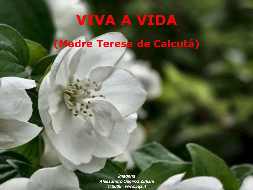 (Madre Teresa de Calcutá) Imagens Alessandro Queiroz Zuliani  2005 - www.aqz.it VIVA A VIDA