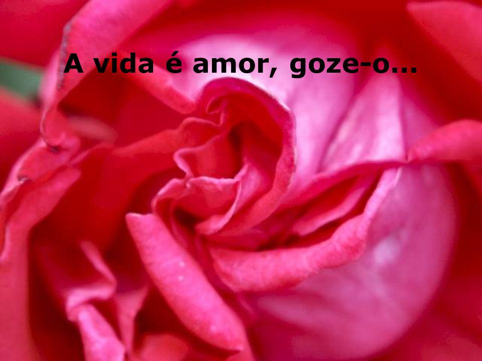 A vida é amor, goze-o...