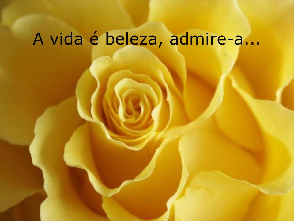 A vida é beleza, admire-a...