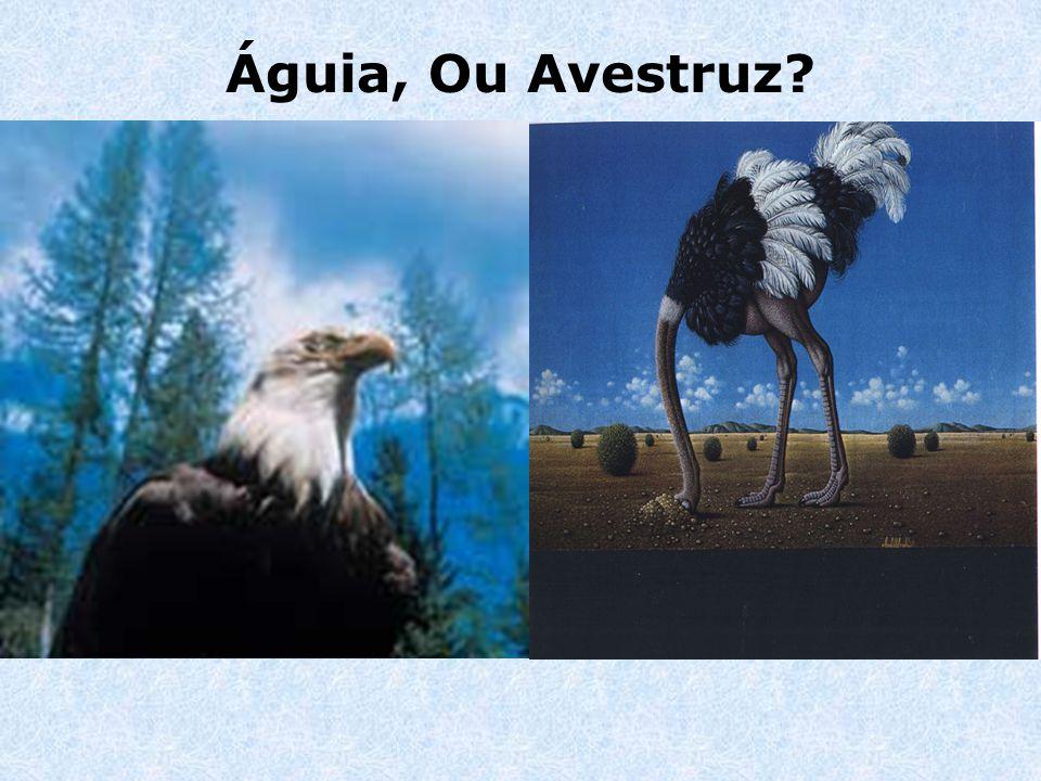 Águia, Ou Avestruz?