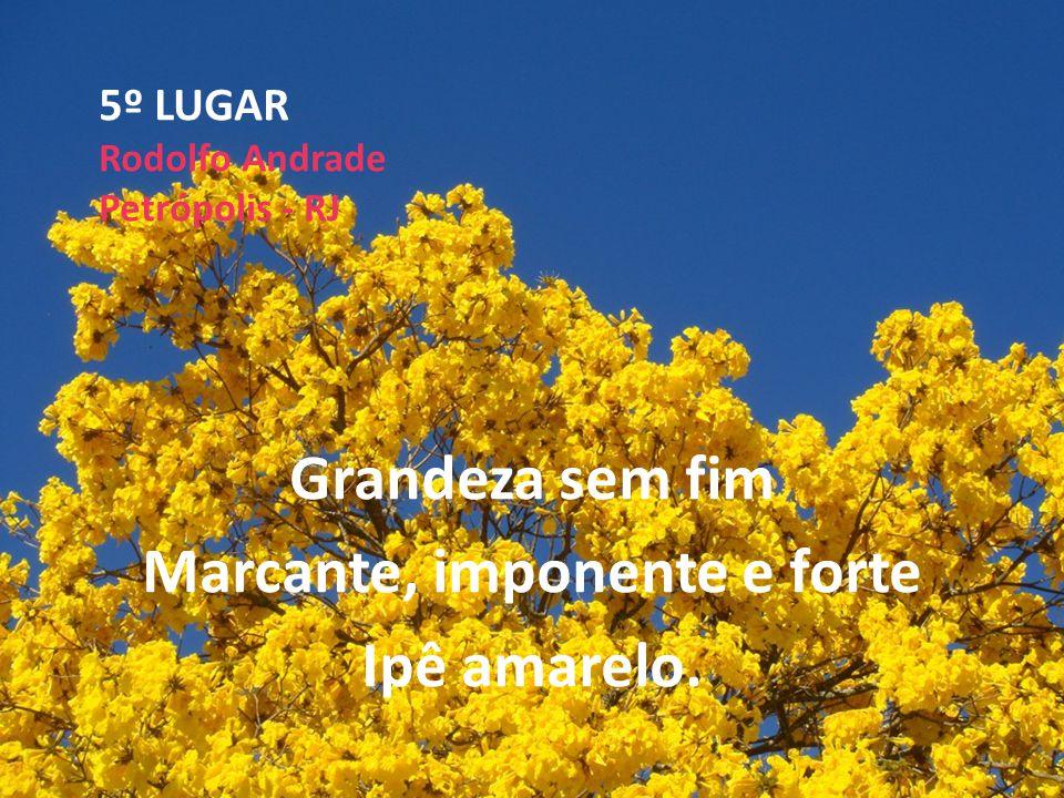 5º LUGAR Rodolfo Andrade Petrópolis - RJ Grandeza sem fim Marcante, imponente e forte Ipê amarelo.