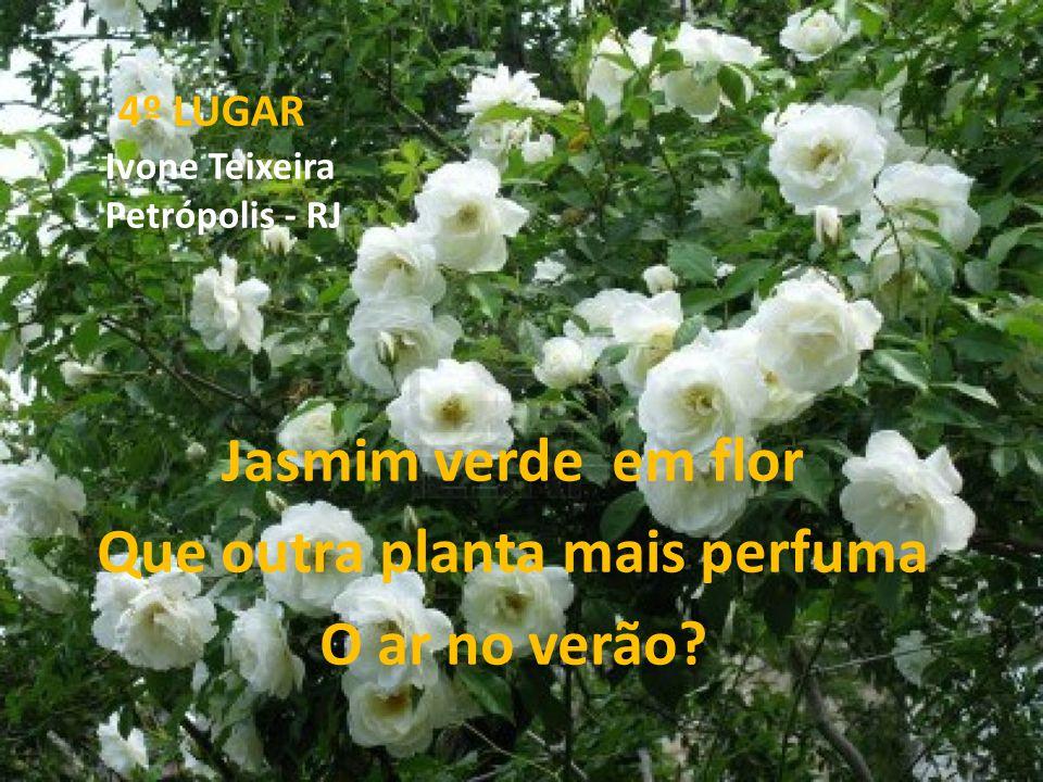 4º LUGAR Ivone Teixeira Petrópolis - RJ Jasmim verde em flor Que outra planta mais perfuma O ar no verão?