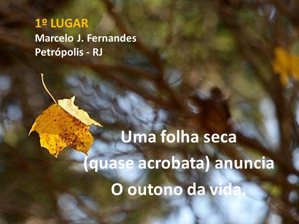 1º LUGAR Marcelo J. Fernandes Petrópolis - RJ Uma folha seca (quase acrobata) anuncia O outono da vida.