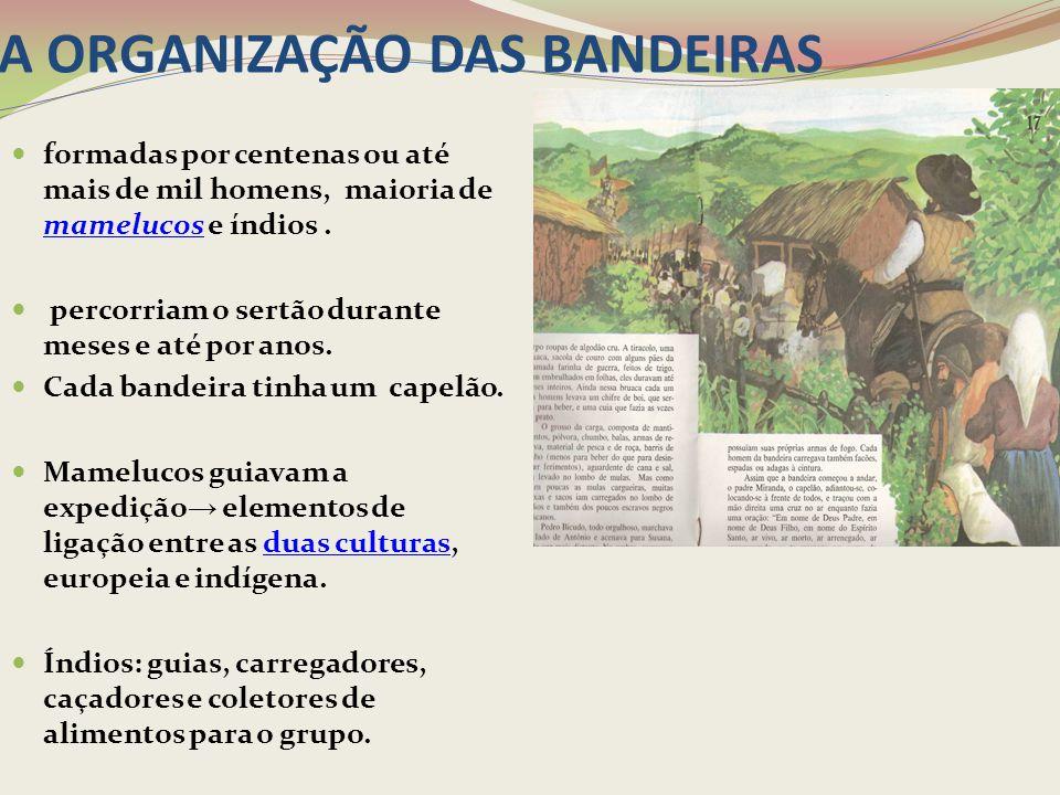 A ORGANIZAÇÃO DAS BANDEIRAS formadas por centenas ou até mais de mil homens, maioria de mamelucos e índios. mamelucos percorriam o sertão durante mese