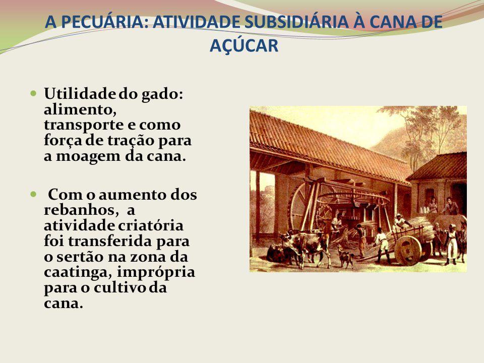 A PECUÁRIA: ATIVIDADE SUBSIDIÁRIA À CANA DE AÇÚCAR Utilidade do gado: alimento, transporte e como força de tração para a moagem da cana. Com o aumento