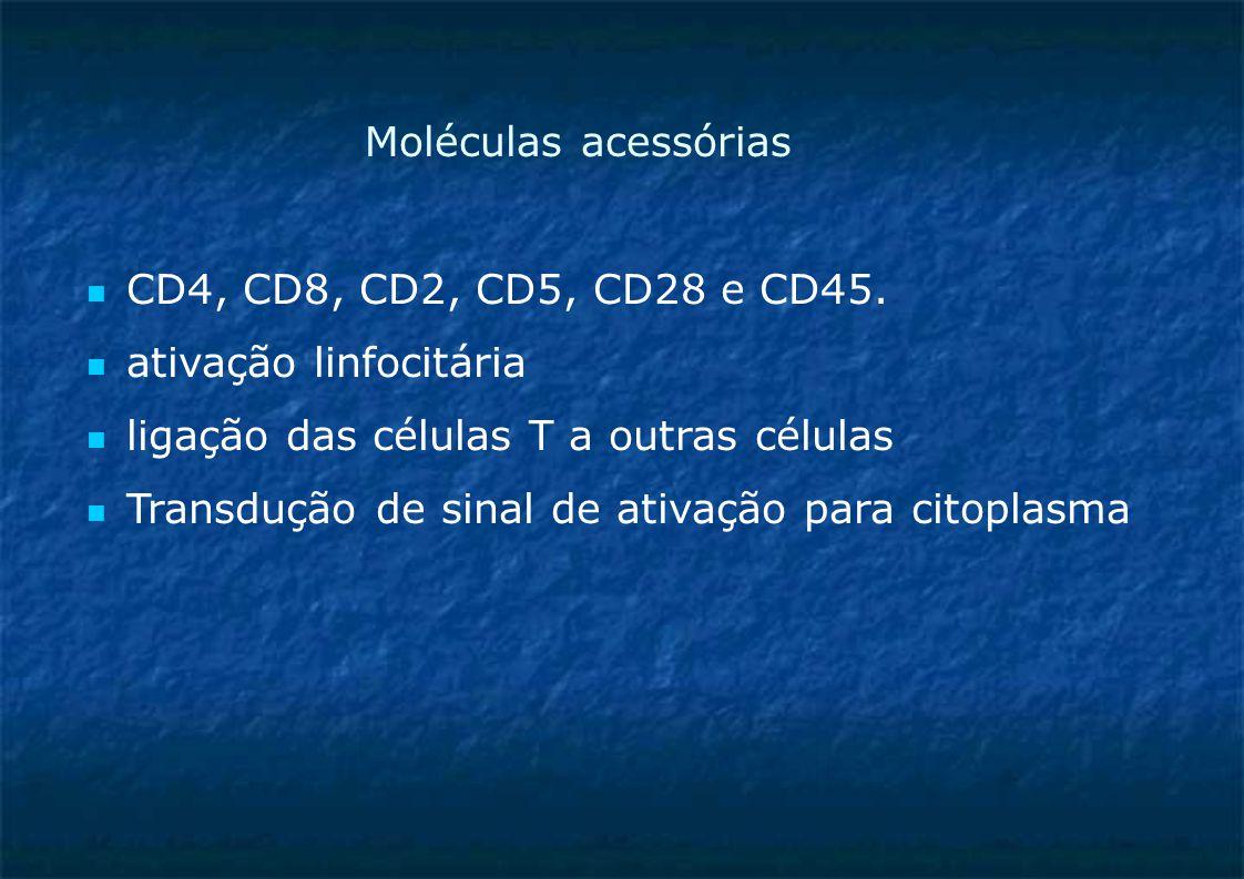 Moléculas acessórias CD4, CD8, CD2, CD5, CD28 e CD45. ativação linfocitária ligação das células T a outras células Transdução de sinal de ativação par