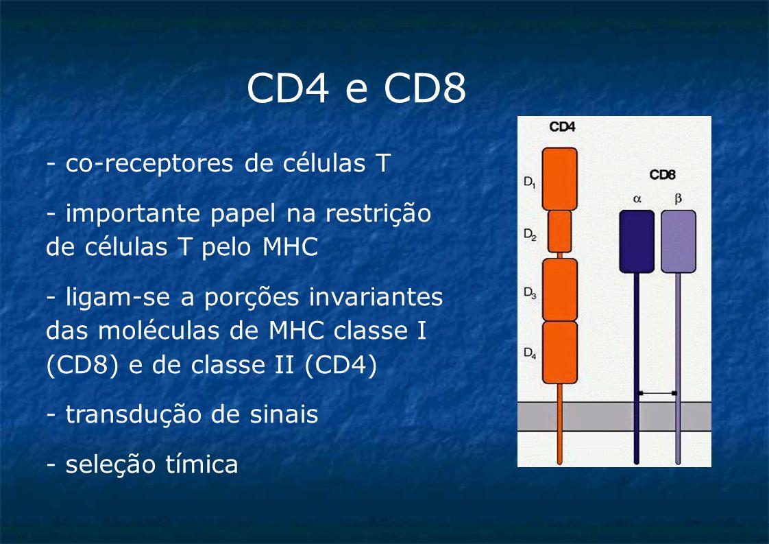 CD4 e CD8 - co-receptores de células T - importante papel na restrição de células T pelo MHC - ligam-se a porções invariantes das moléculas de MHC classe I (CD8) e de classe II (CD4)  - transdução de sinais - seleção tímica