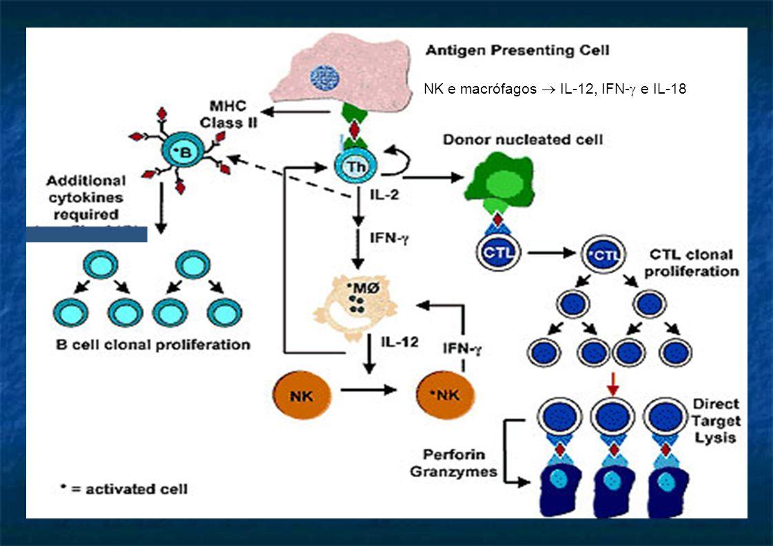 NK e macrófagos  IL-12, IFN-  e IL-18