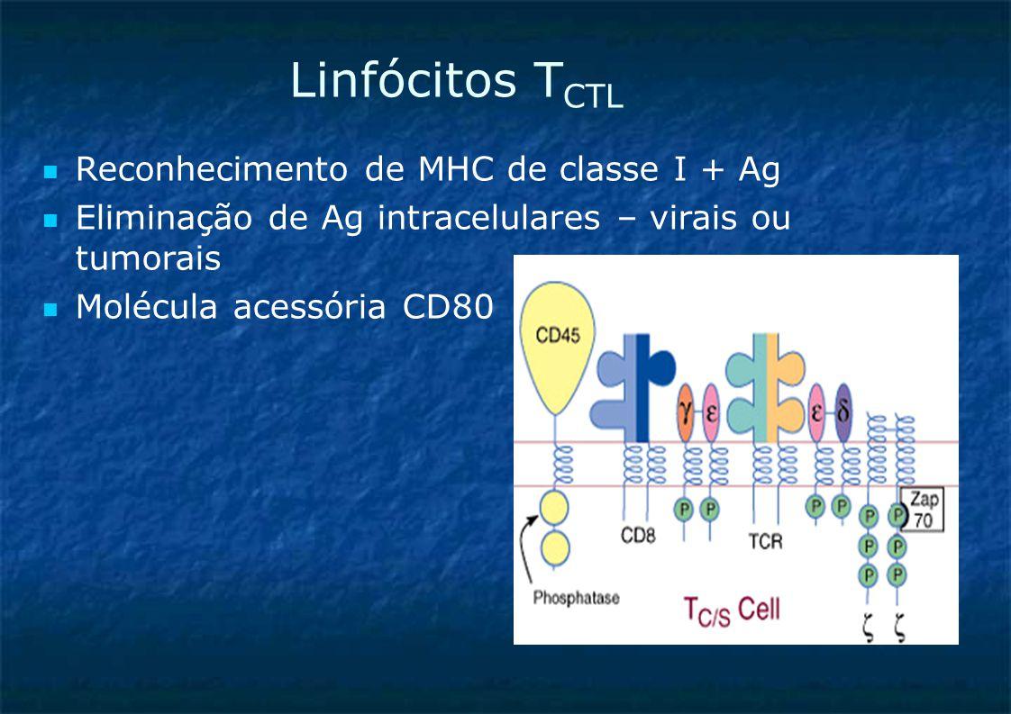 Linfócitos T CTL Reconhecimento de MHC de classe I + Ag Eliminação de Ag intracelulares – virais ou tumorais Molécula acessória CD80