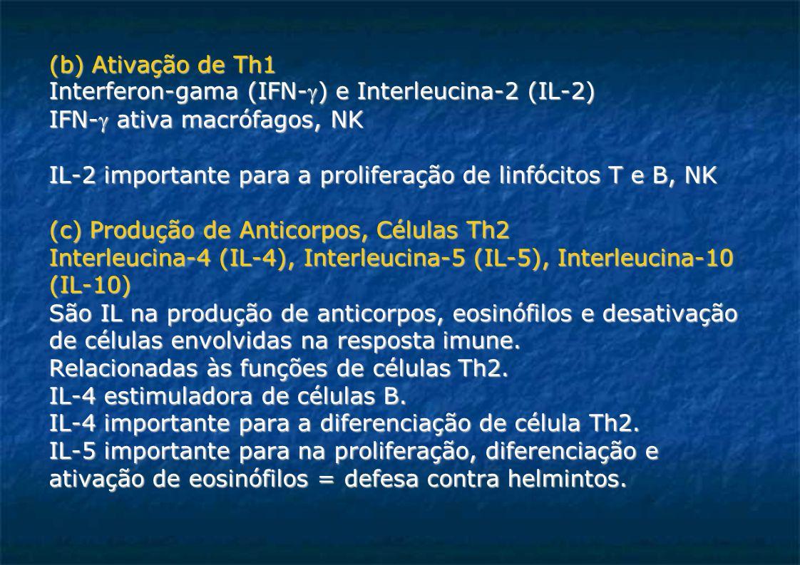 (b) Ativação de Th1 Interferon-gama (IFN-) e Interleucina-2 (IL-2)  IFN- ativa macrófagos, NK IL-2 importante para a proliferação de linfócitos T e B, NK (c) Produção de Anticorpos, Células Th2 Interleucina-4 (IL-4), Interleucina-5 (IL-5), Interleucina-10 (IL-10)  São IL na produção de anticorpos, eosinófilos e desativação de células envolvidas na resposta imune.