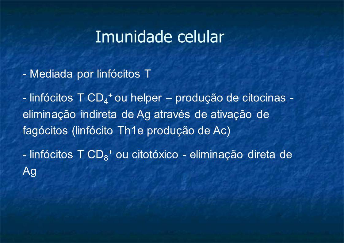 Imunidade celular - Mediada por linfócitos T - linfócitos T CD 4 + ou helper – produção de citocinas - eliminação indireta de Ag através de ativação de fagócitos (linfócito Th1e produção de Ac) - linfócitos T CD 8 + ou citotóxico - eliminação direta de Ag