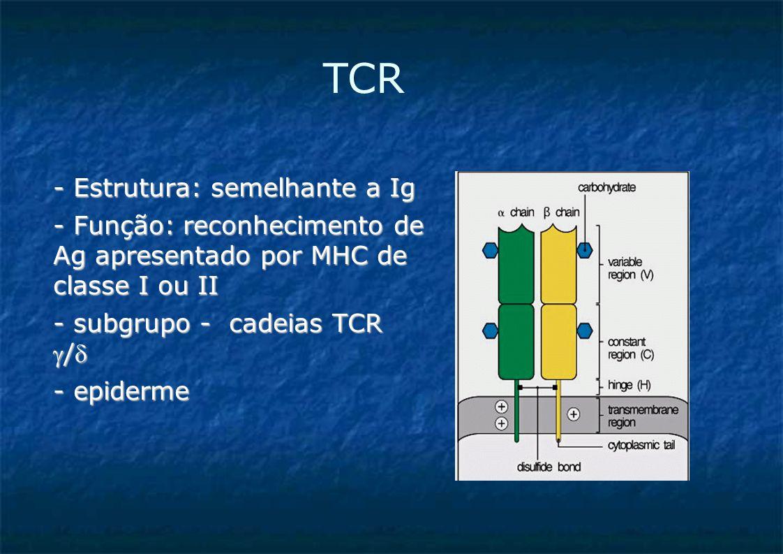 TCR - Estrutura: semelhante a Ig - Função: reconhecimento de Ag apresentado por MHC de classe I ou II - subgrupo - cadeias TCR / - epiderme