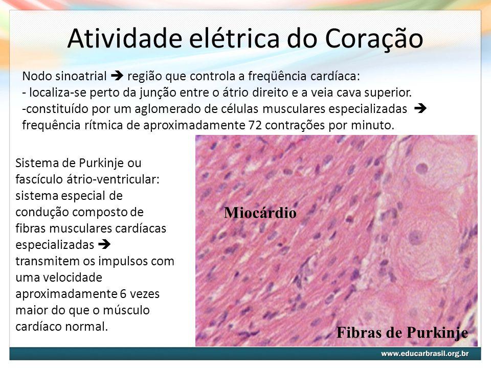 Controle Nervoso do Coração Sistema nervoso Parassimpático Sistema nervoso Simpático Fibras colinérgicas Diminui a frequencia cardíaca Neurotransmissor: Acetilcolina Fibras adrenérgicas Aumenta a frequencia cardíaca Neurotransmissor: Noradrenalina
