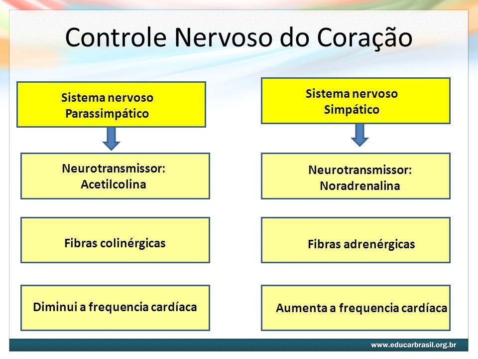 Controle Nervoso do Coração Sistema nervoso Parassimpático Sistema nervoso Simpático Fibras colinérgicas Diminui a frequencia cardíaca Neurotransmisso