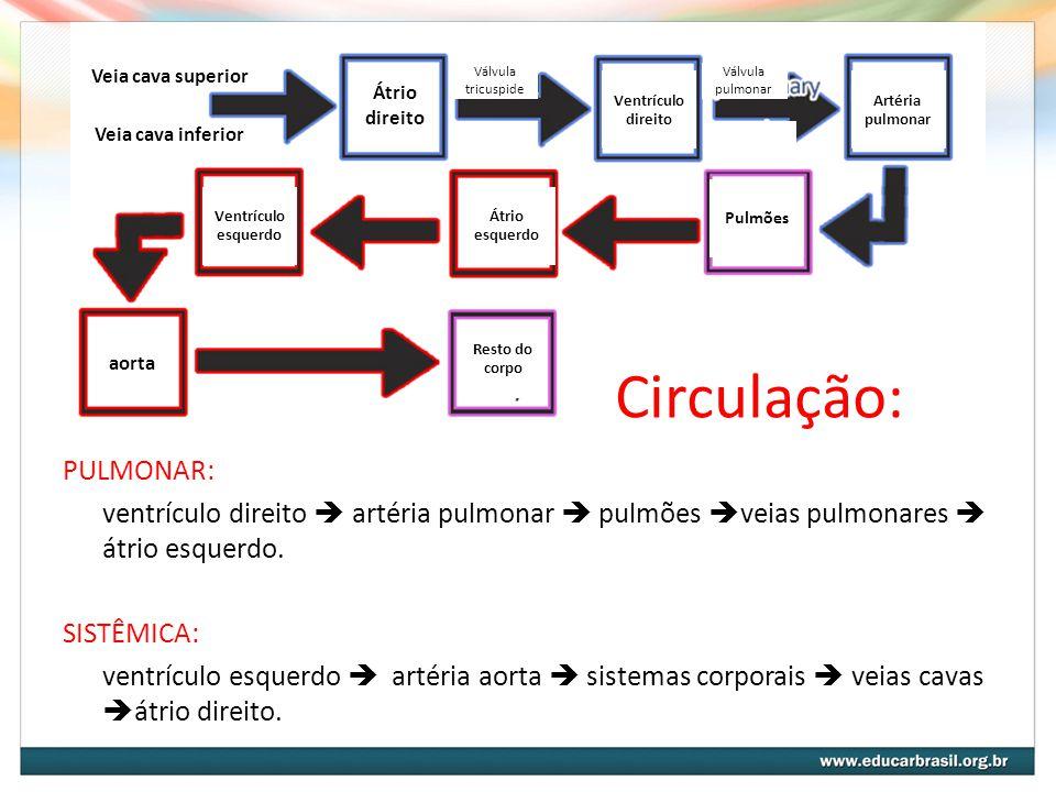 Constituição do Sangue PLASMA: - proteínas: albumina, globulina, fibrinogênio, protrombina, aglutinina - outras substâncias orgânicas: anticorpos, enzimas, hormônios e vitaminas - aminoácidos - substâncias nitrogenadas: uréia, ácido úrico, creatinina - lipídios: colesterol e triglicerídeos - glicídios: glicose ELEMENTOS FIGURADOS: - eritrócitos - leucócitos - plaquetas