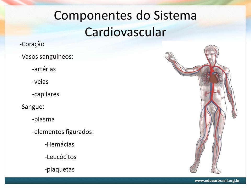 Componentes do Sistema Cardiovascular -Coração -Vasos sanguíneos: -artérias -veias -capilares -Sangue: -plasma -elementos figurados: -Hemácias -Leucóc