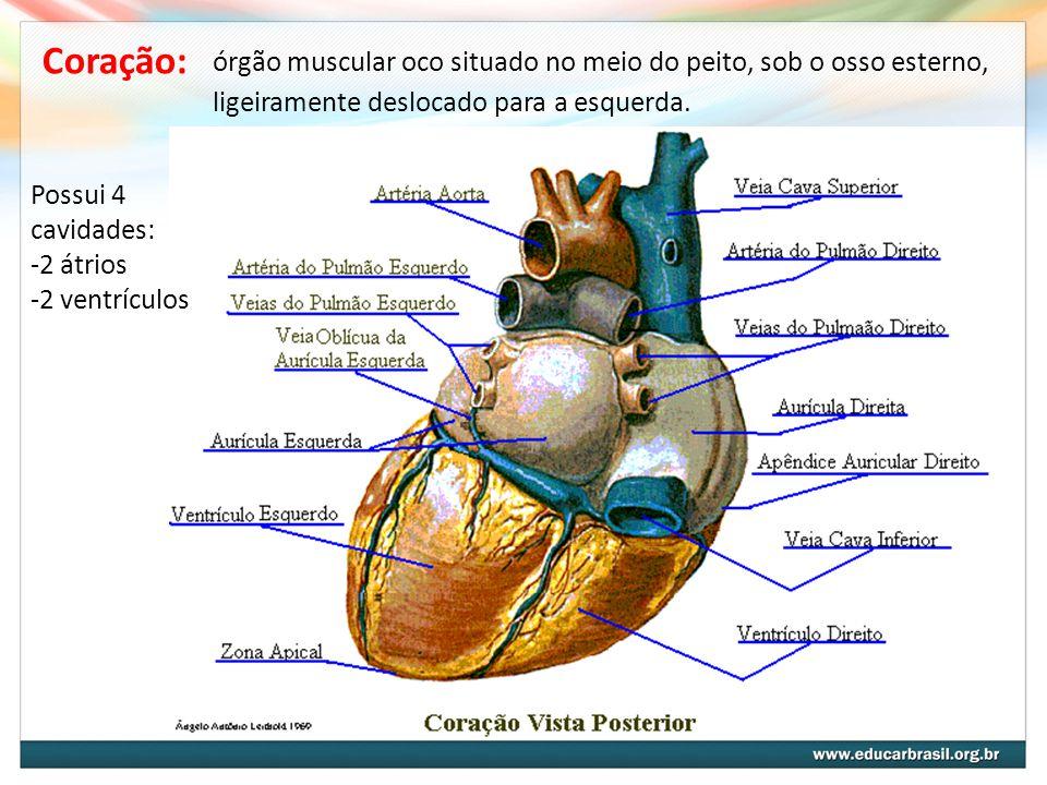 órgão muscular oco situado no meio do peito, sob o osso esterno, ligeiramente deslocado para a esquerda. Coração: Possui 4 cavidades: -2 átrios -2 ven