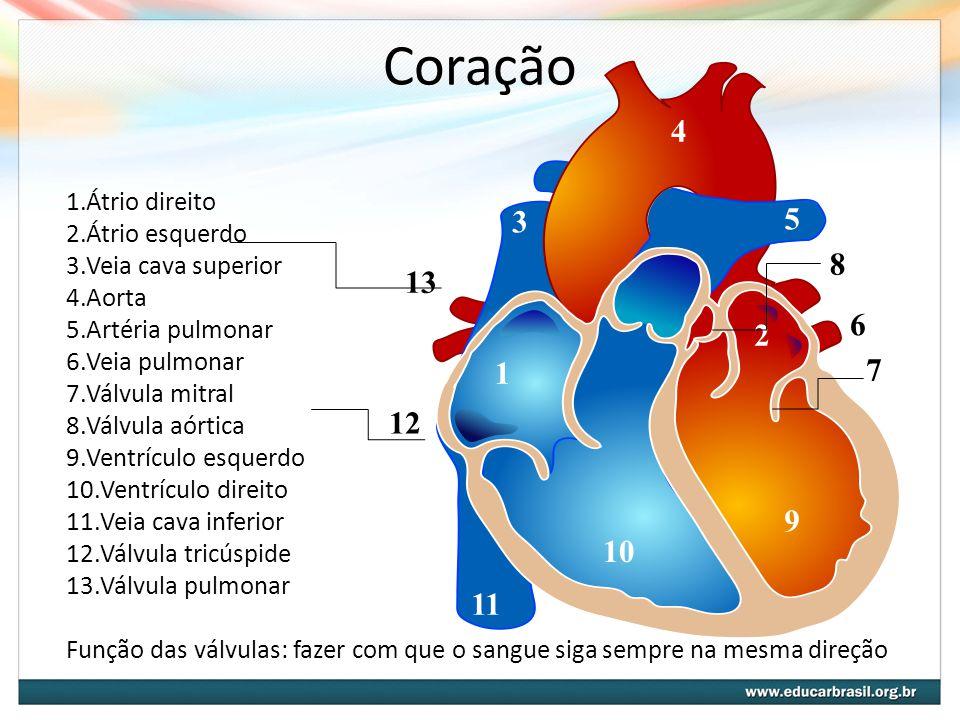Coração 1.Átrio direito 2.Átrio esquerdo 3.Veia cava superior 4.Aorta 5.Artéria pulmonar 6.Veia pulmonar 7.Válvula mitral 8.Válvula aórtica 9.Ventrícu